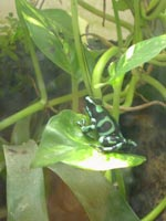 Frogs-2005 0612